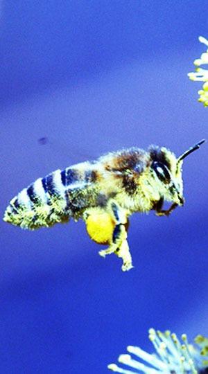Winterzeit ist alles andere als das Aus für Käfer, Wespe und Co