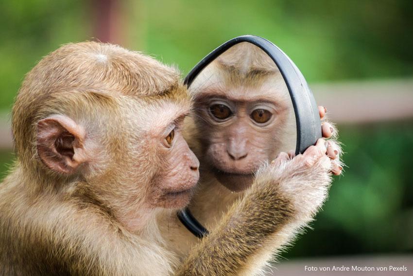 Tierversuchsfreie Kosmetikprodukte